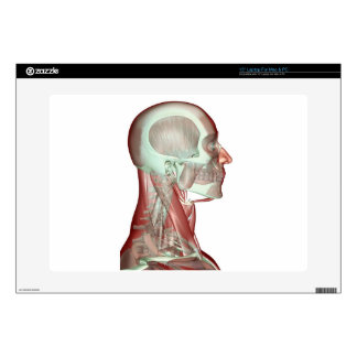 Musculoskeleton of the Head and Neck 2 Laptop Skins
