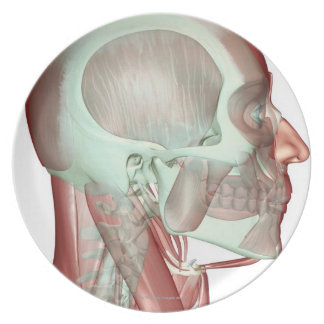 Musculoskeleton of the Head and Neck 2 Melamine Plate