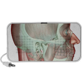 Musculoskeleton of the Head and Neck 2 iPhone Speakers