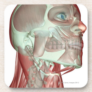 Musculoskeleton of the Head and Neck 3 Beverage Coaster