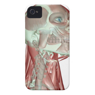 Musculoskeleton of the Head and Neck 3 iPhone 4 Case