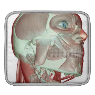 Musculoskeleton of the Head and Neck 3 iPad Sleeve