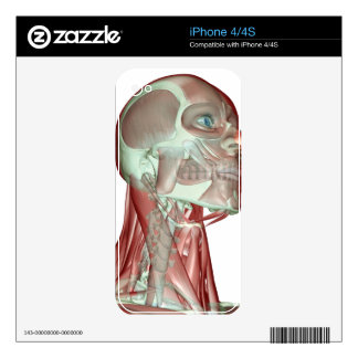 Musculoskeleton of the Head and Neck 3 iPhone 4 Skin
