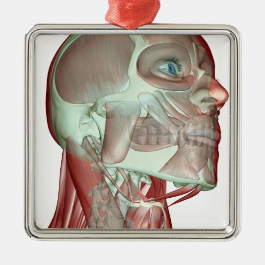 Musculoskeleton of the Head and Neck 3 Metal Ornament