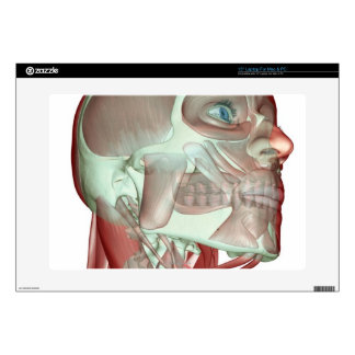 Musculoskeleton of the Head and Neck 3 Skins For Laptops
