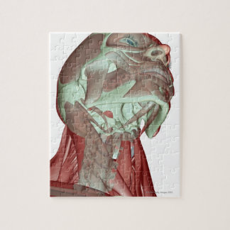Musculoskeleton of the Head and Neck 4 Jigsaw Puzzle