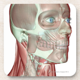 Musculoskeleton of the Head and Neck 5 Beverage Coaster