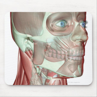 Musculoskeleton of the Head and Neck 5 Mouse Pad