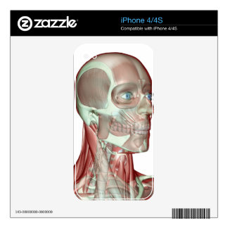 Musculoskeleton of the Head and Neck 5 Skin For The iPhone 4S