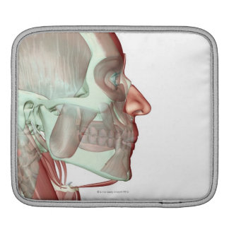 Musculoskeleton of the Head and Neck 6 iPad Sleeve