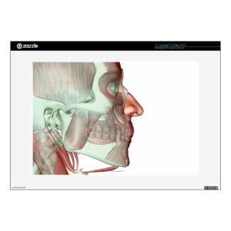"""Musculoskeleton of the Head and Neck 6 Skins For 15"""" Laptops"""