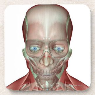 Musculoskeleton of the Head and Neck 7 Beverage Coasters