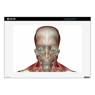 Musculoskeleton of the Head and Neck 7 Decal For Laptop