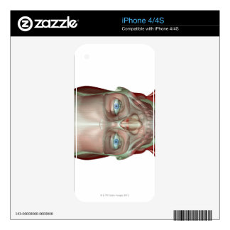 Musculoskeleton of the Head and Neck 7 Skins For iPhone 4