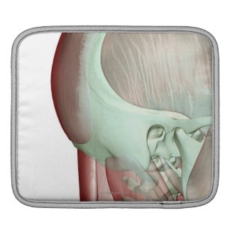 Musculoskeleton of the Head and Neck 8 Sleeves For iPads
