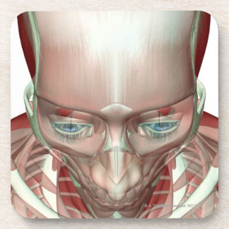 Musculoskeleton of the Head and Neck Beverage Coaster