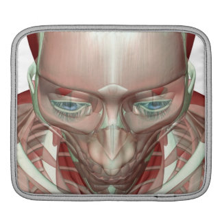 Musculoskeleton of the Head and Neck iPad Sleeves