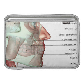Musculoskeleton of the Jaw 2 MacBook Air Sleeve