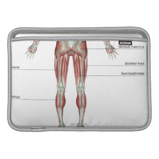 Musculoskeleton of the Lower Body MacBook Air Sleeves