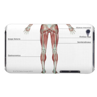 Musculoskeleton of the Lower Body iPod Case-Mate Case