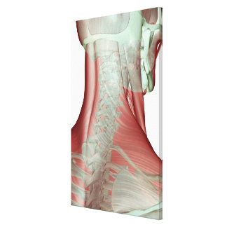 Musculoskeleton of the Neck Canvas Print