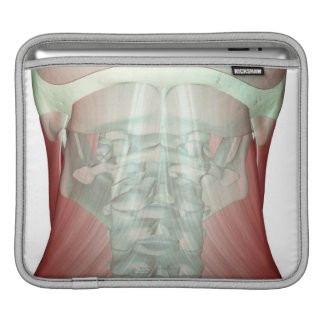 Musculoskeleton of the Neck iPad Sleeves