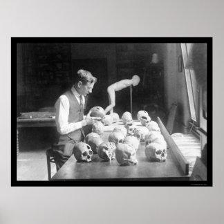 Museo 1926 de los cráneos de Trepanned Póster