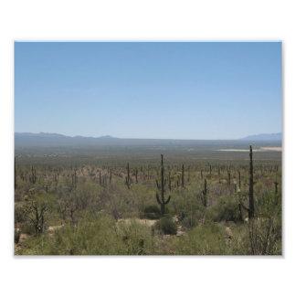 Museo del desierto del Sonora Impresion Fotografica