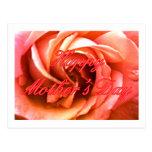 MUSEO rosado rojo feliz Zazzle de RoseThe del día Postal