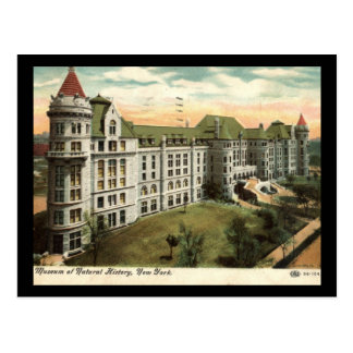 Museum of Natural History, New York City 1910 Vint Postcard