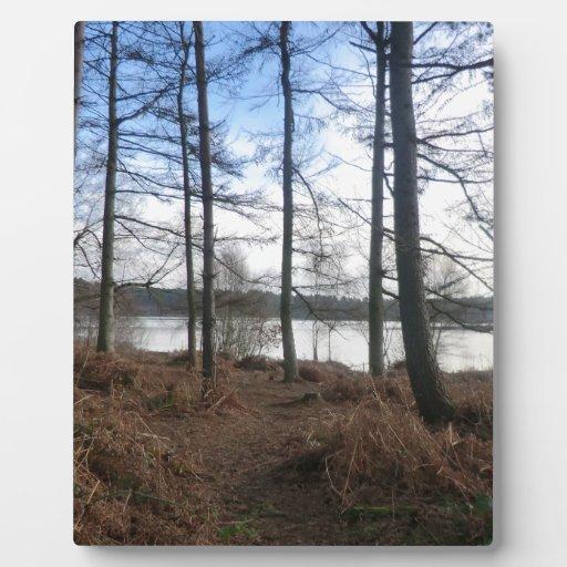 Musgo de Blakemere en el bosque de Delamere Placa De Plastico