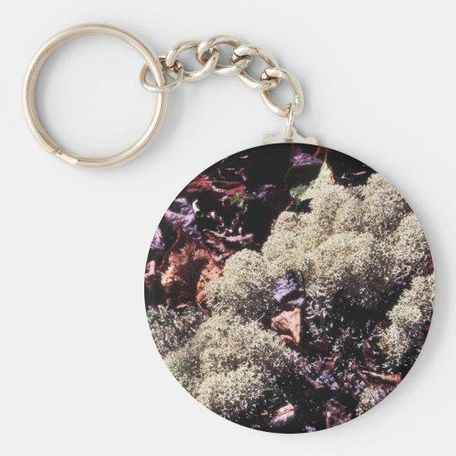Musgo de reno o liquen del musgo del caribú llaveros personalizados