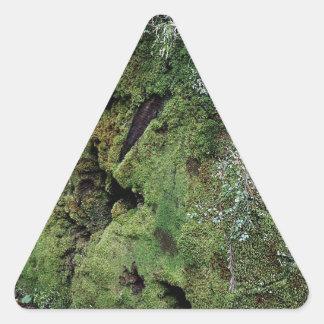 Musgo en secoya caida pegatina triangular