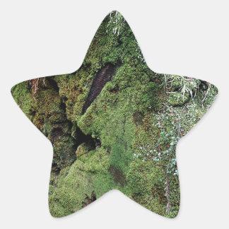 Musgo en secoya caida pegatina en forma de estrella