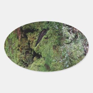 Musgo en secoya caida pegatina ovalada
