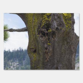 Musgo en un árbol viejo cartel