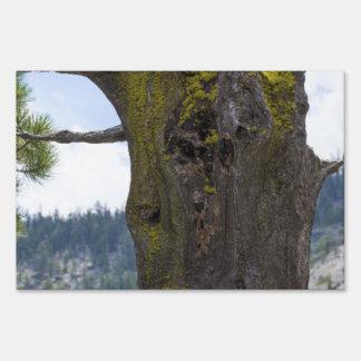 Musgo en un árbol viejo carteles