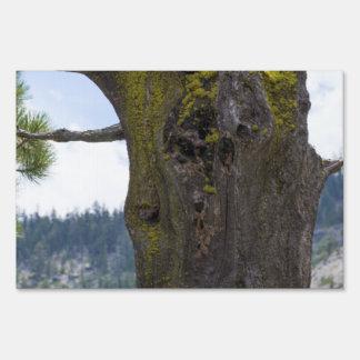 Musgo en un árbol viejo letreros