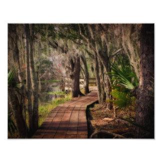 Musgo español y pantanos de Luisiana Impresiones Fotograficas