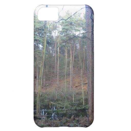 Musgo negro en el bosque de Delamere, Cheshire