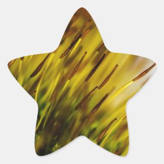 Musgo Pegatina En Forma De Estrella
