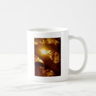 musgo solar taza clásica