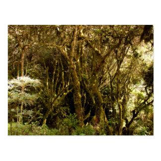 Musgo tropical peruano de la selva tropical cubier postales