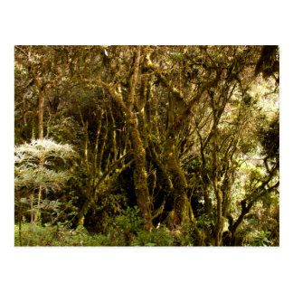Musgo tropical peruano de la selva tropical cubier tarjeta postal