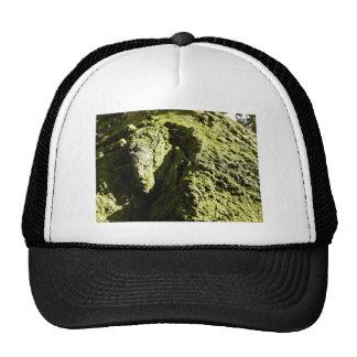 Musgo verde claro en tronco de árbol gorra