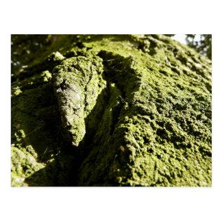 Musgo verde claro en tronco de árbol tarjeta postal