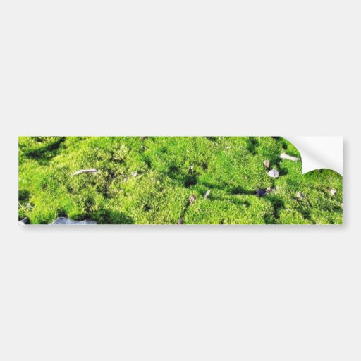 Musgo verde fresco con algunas piedras alrededor pegatina para auto