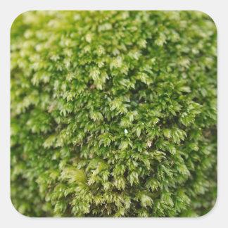 Musgo verde pegatina cuadrada
