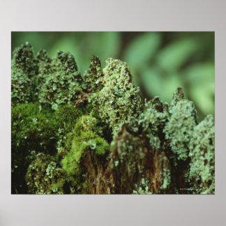 Musgo verde póster