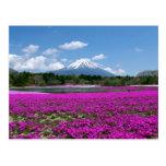 Musgo y el monte Fuji rosados en el fondo Postal